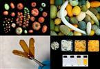 MEJORA GENÉTICA, BIOQUÍMICA Y BIOECONOMIA CIRCULAR DE PLANTAS HORTÍCOLAS (HORTGENyECO)