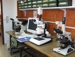 ESTUDIOS CARDIOVASCULARES EN VERTEBRADOS